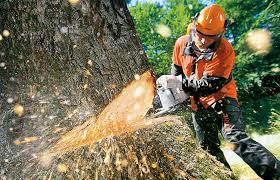 tree cutting harare
